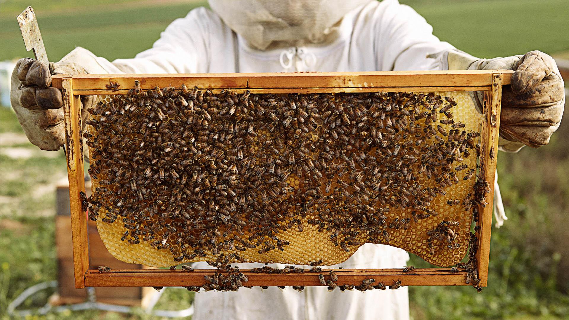save the bees u2013 with natural backyard hives